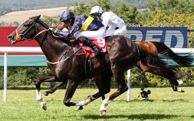 Goodwood 28/08/2016 – Supreme Stakes Preview